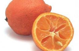 Citrus 4